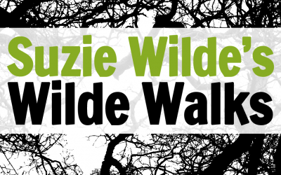 Wilde Walk: a message for our times
