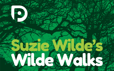 Wilde Walk: building concern