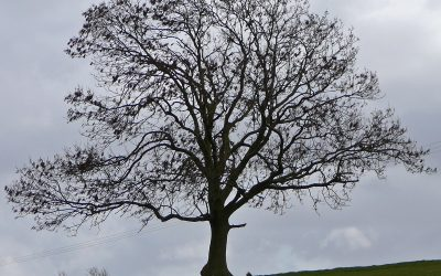 More than 400 local sites are suitable for new trees