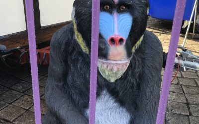 Voices of Petersfield market: al fresco breakfast with gorillas