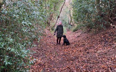 Wilde Walks – from Home